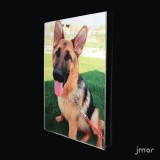 esempio di utilizzo con foto del cane YAGO